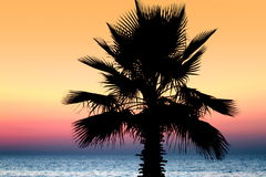 Sunset and palm tree Royalty Free Stock Photo