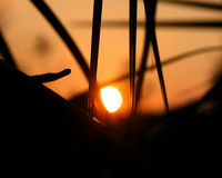 Sunset through a palm tree. The sunsetting inbetween a palm tree Royalty Free Stock Images