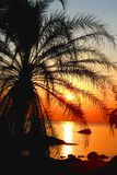 Sunset through a palm tree royalty free stock photography