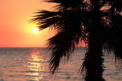 Sunset and palm tree on the beach Stock Image