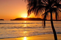 Sunset by a palm tree in a beach. The sun sets in a beautiful beach in Costa Rica Stock Images