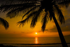 Sunset and palm tree on the beach Maui Royalty Free Stock Photos