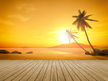 Sunset palm tree Royalty Free Stock Photos