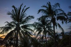 Sunset with palm tree and colorful sky stock photography