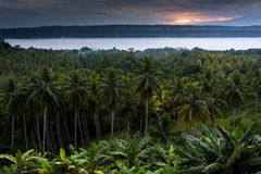 Sunset on palm tree forest Stock Image