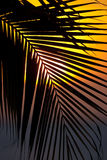 Sunset through a palm tree frond Royalty Free Stock Photography