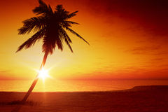 Sunset palm tree Stock Photo