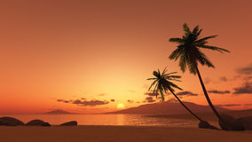 Sunset palm tree Royalty Free Stock Images