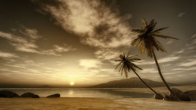 Sunset palm tree Stock Images