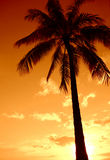Sunset Palm Tree Paradise. A Palm Tree Set Against A Hawaiian Sunset Royalty Free Stock Photo