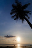 Sunset with palm tree silhouette Royalty Free Stock Image