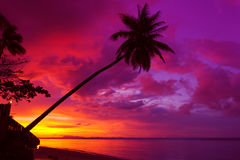 Sunset palm tree silhouette Royalty Free Stock Photography