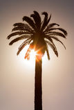 Sunset with palm tree. Silhouette of palm. Date trees at sunset stock image