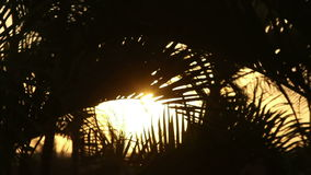 Sunset palm tree silhouette. Video of sunset palm tree silhouette stock video footage
