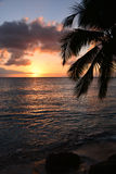 Sunset with palm tree and sky Stock Image