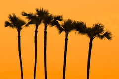 Sunset at palm tree on south of thailand Royalty Free Stock Photos