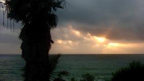 Sunset and Palm Tree SWAMIS Encinitas California.  stock video