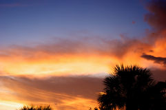 Sunset with palm trees Royalty Free Stock Photo