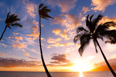 Sunset Palm Trees Stock Image