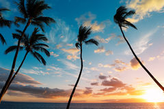 Sunset Palm Trees Stock Photos