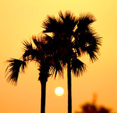 Sunset between palm trees. Bagan Archaeological Zone, Myanmar (Burma royalty free stock photo