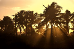 Sunset through the palm trees Royalty Free Stock Images