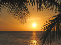 Sunset through the palm trees. Over the caraibe sea - Roatan island - Honduras Stock Image