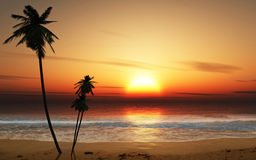 Sunset Palm trees. With gentle ocean waves Royalty Free Stock Image