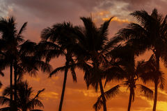 Sunset Palm Trees Royalty Free Stock Image