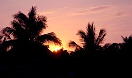 Sunset and palm trees Stock Photography
