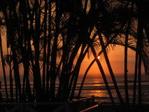 Sunset and Palm Trees Stock Images