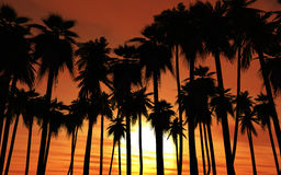 Sunset palm trees Stock Photo