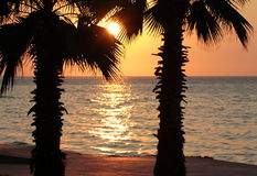 Sunset and palm trees on the beach Stock Images