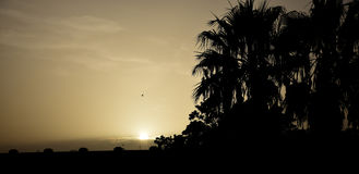 Sunset with palm trees and birds in the Malaga coast. Sunset with palm trees and birds Royalty Free Stock Images