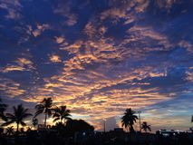 Sunset and palm trees Royalty Free Stock Photos