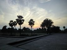 Sunset within palm trees. Evening view within palm trees in Sikandra located in Agra Royalty Free Stock Photos