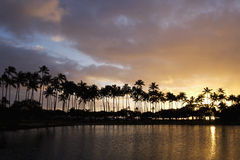 Sunset and palm trees in hawaii Stock Image