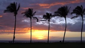 Sunset with Palm Trees in Hawaii. People running with sunset in Maui Hawaii stock video footage
