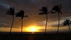 Sunset with Palm Trees in Hawaii. People running with sunset in Maui Hawaii stock footage