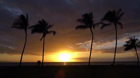 Sunset with Palm Trees in Hawaii. Sunset with Palm Trees in Maui Hawaii stock footage