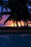 Sunset between the palm trees in Kihei Royalty Free Stock Images