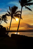 Sunset Palm Trees on Maui Hawaii stock images