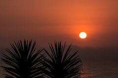 Sunset between palm trees. Palm silhouettes royalty free stock photos