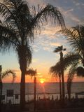 Sunset through the palm trees. Paphos sea front Stock Photos