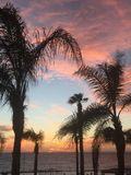 Sunset through the palm trees. Paphos sea front Royalty Free Stock Photography