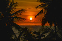 Sunset with palm trees silhouette. Beautiful sunset with palm trees silhouette Stock Image