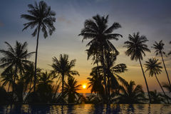 Sunset with palm trees silhouette. Beautiful sunset with palm trees silhouette Stock Photo