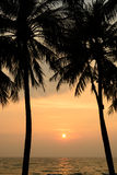Sunset with Palm trees silhouette in Chang island or Koh Chang Stock Images