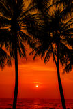 Sunset with Palm trees silhouette in Chang island or Koh Chang Royalty Free Stock Photo