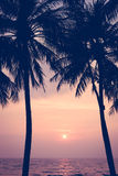 Sunset with Palm trees silhouette in Chang island or Koh Chang Royalty Free Stock Image